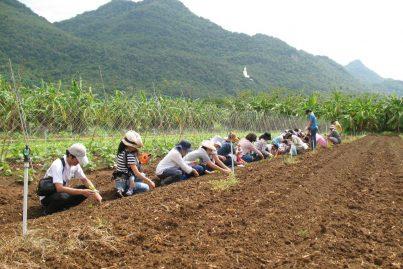 自然と触れ合える♪SUSTAINAの農園ツアー