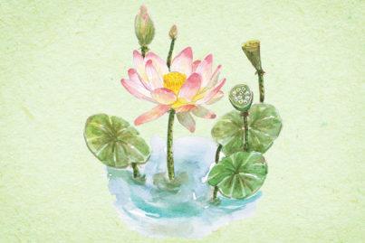 花にまつわる物語