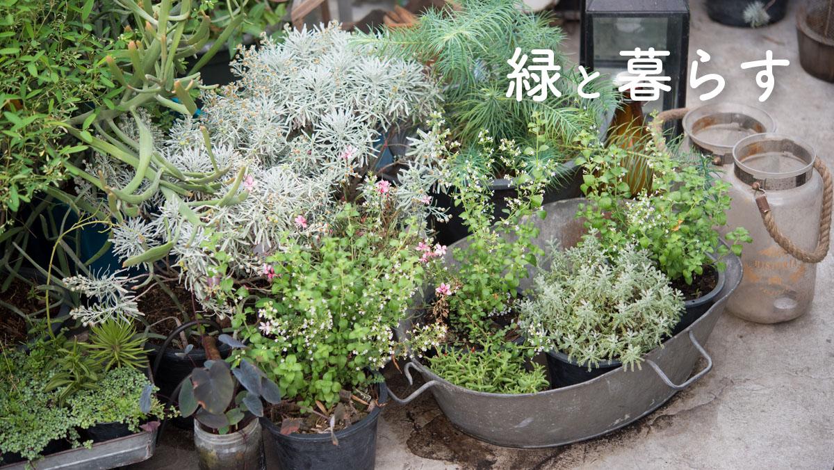 素敵な緑に出会えるお店、マーケット 様々な植物をご紹介