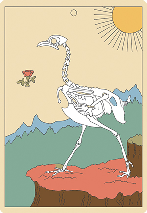 Card-05