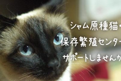 猫に出会える雑貨屋Chico(チコ)さんからクラウドファンディングのお知らせ